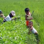 Dahlan Berang Subsidi Pupuk Organik Dicabut DPR