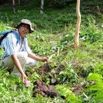 Kawanan Gajah Liar Rutin 'Sambangi' Kebun Karet di Dusun Damar Itam