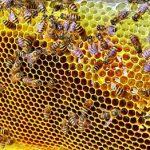 Polikultur: Kopi & Madu untuk Perekonomian & Pelestarian Alam