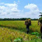 Desa Pendua, Desa Model Daulat Pangan Lombok Utara