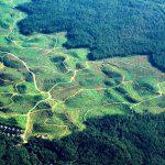 MA Perintahkan Jokowi Cabut Aturan Hutan Lindung Bisa Jadi Perkebunan